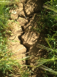 Dry Earth Cracks