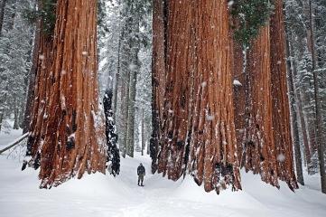 in-wintertrees