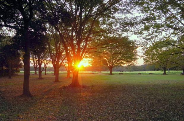 sunset-2334074_1280