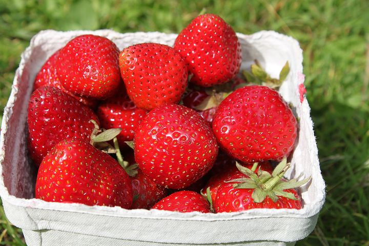 strawberries-2270463__480