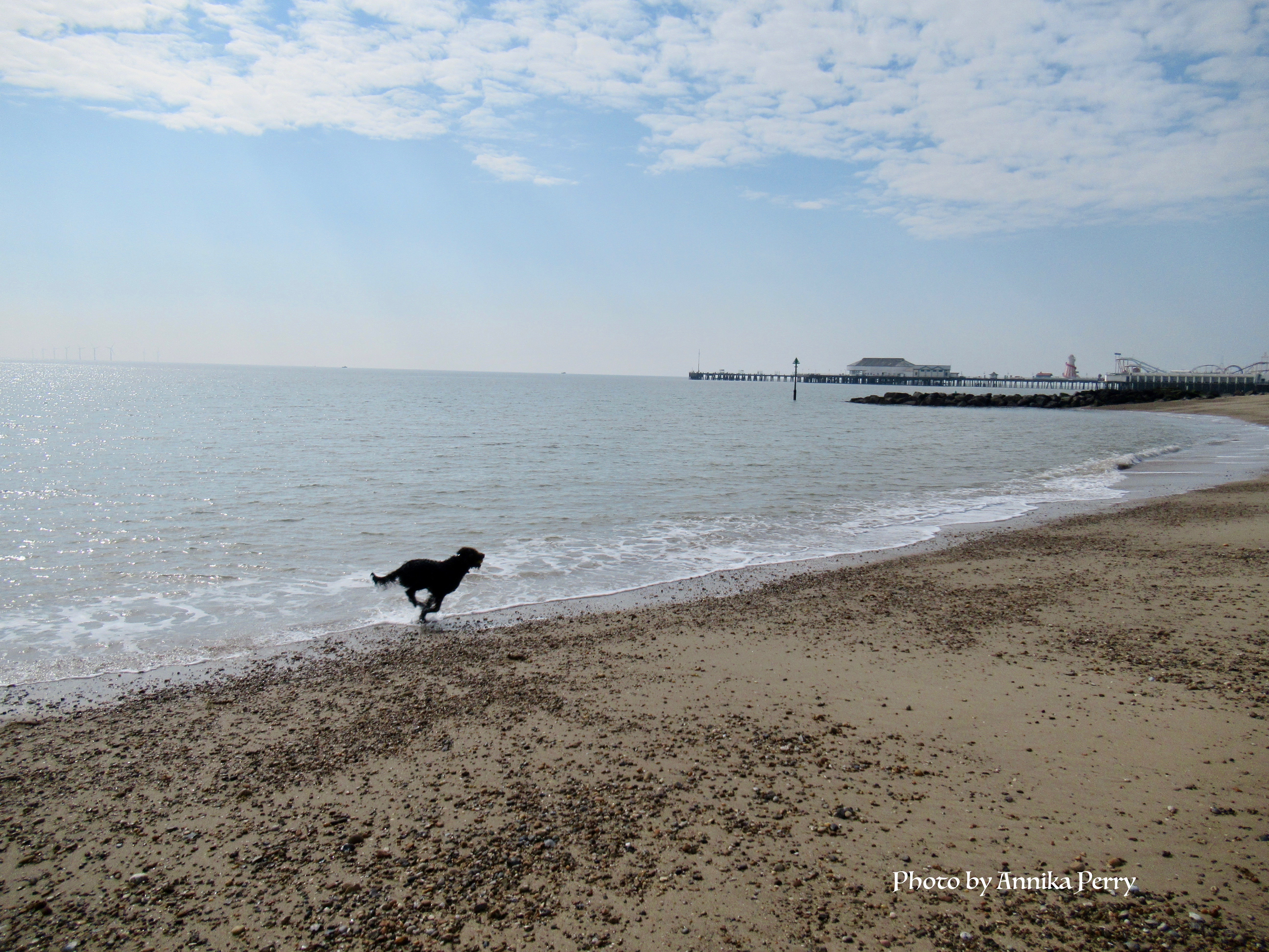 """""""Dog running fast along empty beach towards pier in the background."""""""